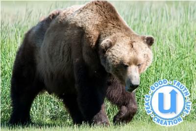 AnimalsBear5