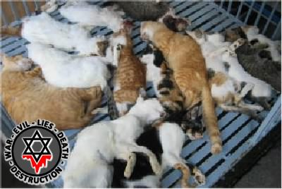AnimalsCat2