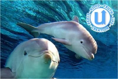 AnimalsDolphin5