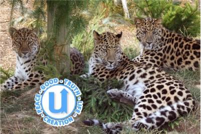 AnimalsLeopard3