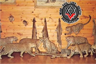 AnimalsLeopard4
