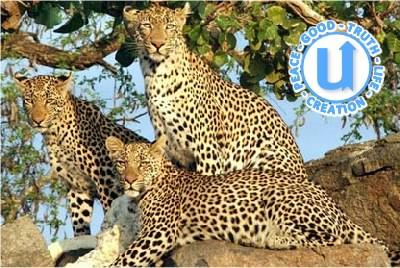 AnimalsLeopard5