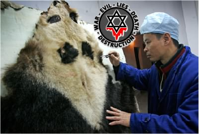 AnimalsPanda2