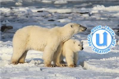 AnimalsPolarBear17