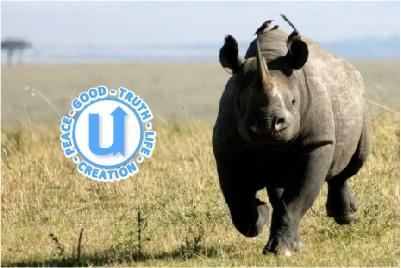 AnimalsRhino1