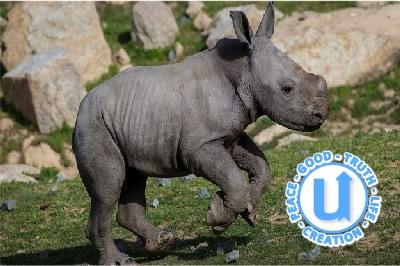 AnimalsRhino11