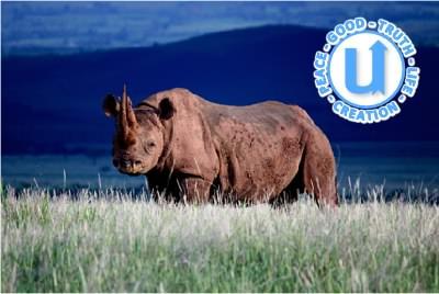 AnimalsRhino13