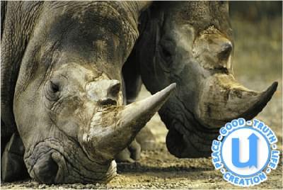 AnimalsRhino15