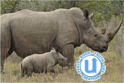 AnimalsRhino17