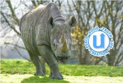 AnimalsRhino23
