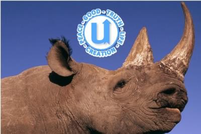 AnimalsRhino3