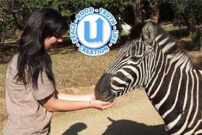 AnimalsZebra5