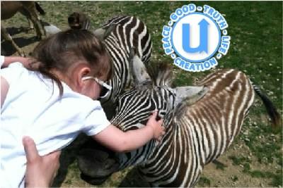 AnimalsZebra7