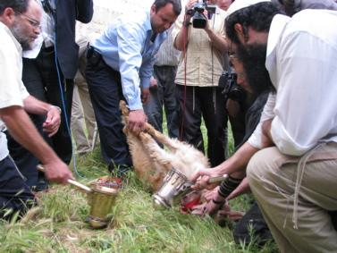 Do you like animals?  This one's being torturously drained of its' blood by satanic jews.