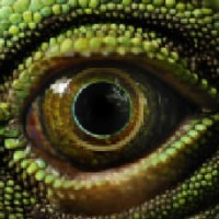 REPTILE EYE:            Note The Rings!  (Kinda Like Saturn Huh?)